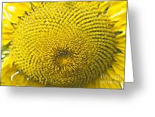 Sunflower Buzz Greeting Card