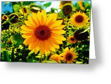 Sunflower Centered Greeting Card