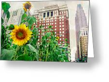 Sunflower City Greeting Card