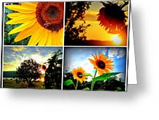 Sunflower Collage II Greeting Card