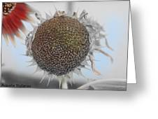 Sunflower Core Greeting Card