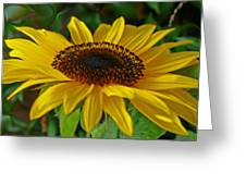 Sunflower Greeting Card by Daniele Smith