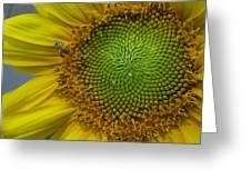 Sunflower Dew-bee Greeting Card