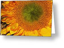 Sunflower Digital Painting Greeting Card
