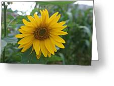 Sunflower Directly... Greeting Card