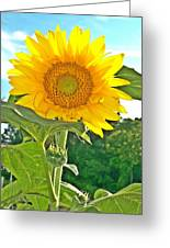 Sunflower Dreams Greeting Card