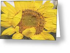 Sunflower Drying Up Greeting Card