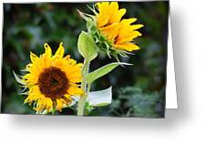 Sunflower Duo Greeting Card
