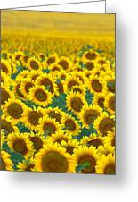Sunflower Explosion Greeting Card