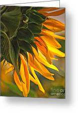 Sunflower Farm 1 Greeting Card