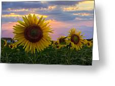 Sunflower Field Greeting Card by Debra and Dave Vanderlaan