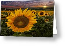 Sunflower Field Forever Greeting Card