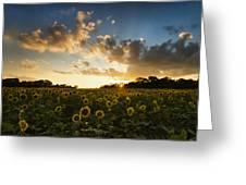 Sunflower Field Sunset Greeting Card