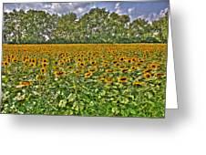 Sunflower Fields Ford World Headquarters Dearborn Mi Greeting Card