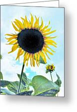 Sunflower Fields Forever One Greeting Card