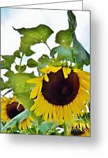 Sunflower Fields Forever Two Greeting Card