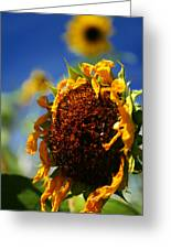 Sunflower Four Greeting Card