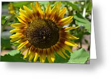 Sunflower Glory Greeting Card