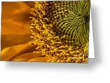 Sunflower Grace Greeting Card