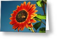 Sunflower Honey Bee Greeting Card