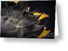 Sunflower IIi Greeting Card