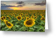 Sunflower Images - A Field Of Golden Texas Wildflowers Greeting Card