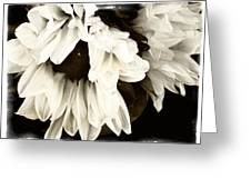 Sunflower In Black And White 1 Greeting Card