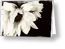 Sunflower In Black And White 2 Greeting Card by Tanya Jacobson-Smith