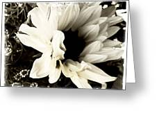 Sunflower In Black And White 3 Greeting Card by Tanya Jacobson-Smith