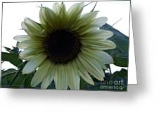 Sunflower In Light Greeting Card