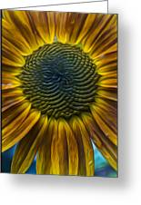 Sunflower In Rain Greeting Card