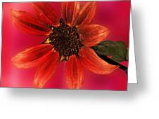 Sunflower In Red Greeting Card