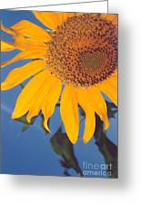 Sunflower In The Corner Greeting Card