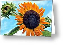 Sunflower In The Sky Greeting Card