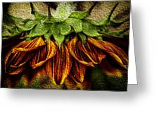 Sunflower Greeting Card by John Monteath