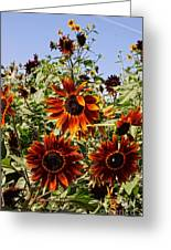 Sunflower Layers Greeting Card by Kerri Mortenson