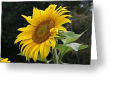 Sunflower Looking To The Sky Greeting Card
