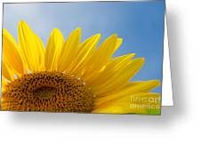 Sunflower Looking Up Greeting Card