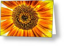 Sunflower Macro Greeting Card