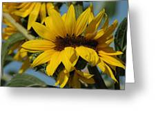 Sunflower Madness  Greeting Card by Scott Ware