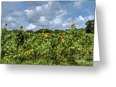 Sunflower Maze Greeting Card