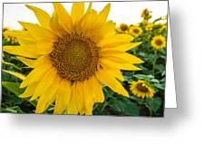Fibonacci In Full Bloom Greeting Card