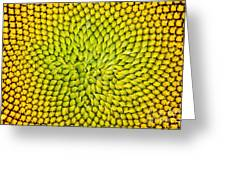 Sunflower Middle  Greeting Card