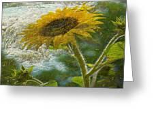 Sunflower Mountain Greeting Card