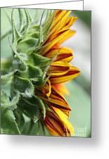 Sunflower Named The Joker Greeting Card