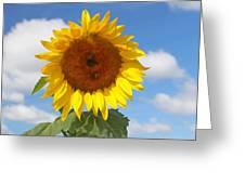 Sunflower Nirvana 30 Greeting Card
