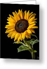 Sunflower Number 2 Greeting Card