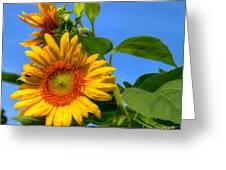 Sunflower Pair Greeting Card