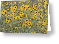 Sunflower Patch On The Hill Greeting Card by Tom Janca