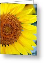 Sunflower Petals Greeting Card